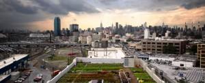 cropped-stadslandbouw-0